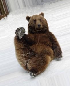Медведь катится с горы 3